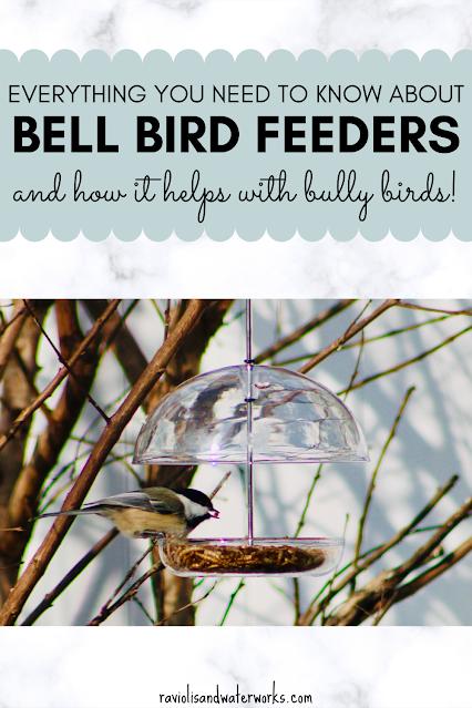 how to keep away bully birds