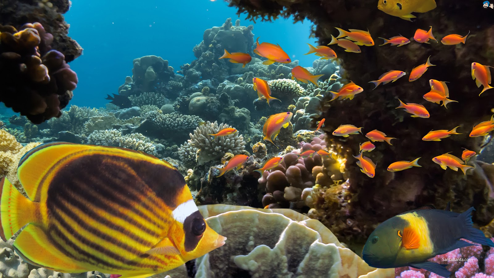 3d Fish Wallpapers For Desktop Aquatic Hd Wallpapers Most Beautiful Places In The World
