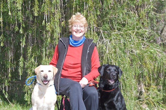 Image Result For Dog Training Perth