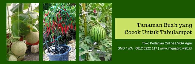 tanaman,buah,tabulampot,budidaya tanaman,lmga agro