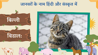 Cat name in sanskrit and hindi with images