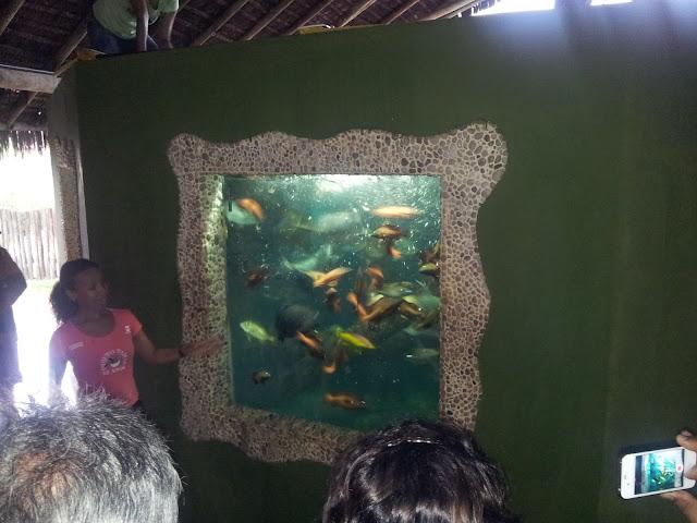 Passeio, Variedades, Viagens, Oceanário de Aracju, Dicas de Viagens, férias, aracaju, animais marinhos, tartarugas, peixes,
