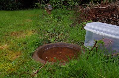 hog hedgehog feeder water dried cat food