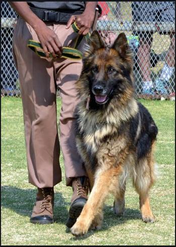 Dogs, Dog Breeds, Animals, Pets,