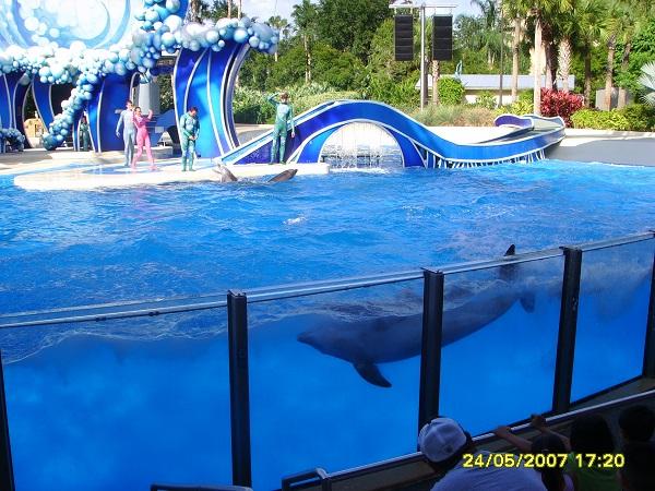 Delfin taucht während einer Show in Sea World Orlando, Florida
