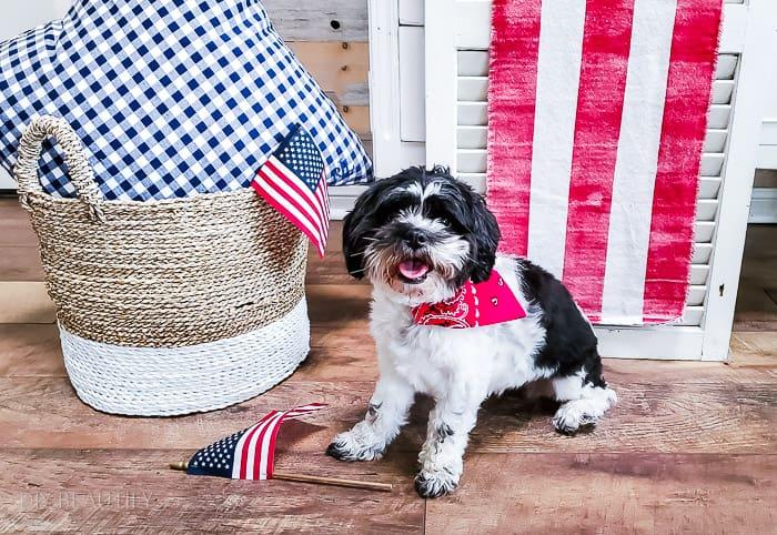 patriotic dog bandana on black and white Shipoo
