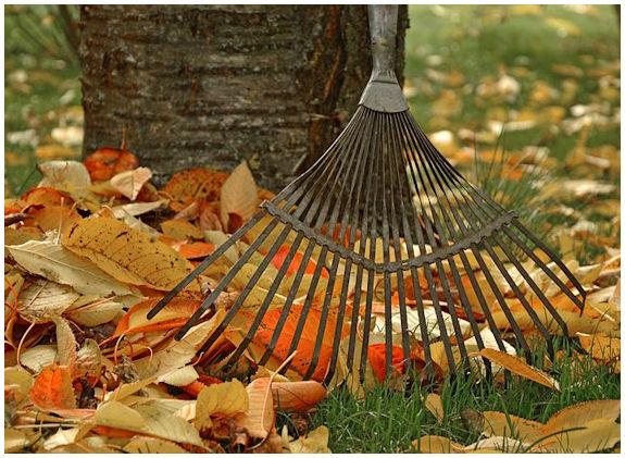 Syysvärikkäitä lehtiä puunjuurella ja puuhun nojaava lehtiharava.