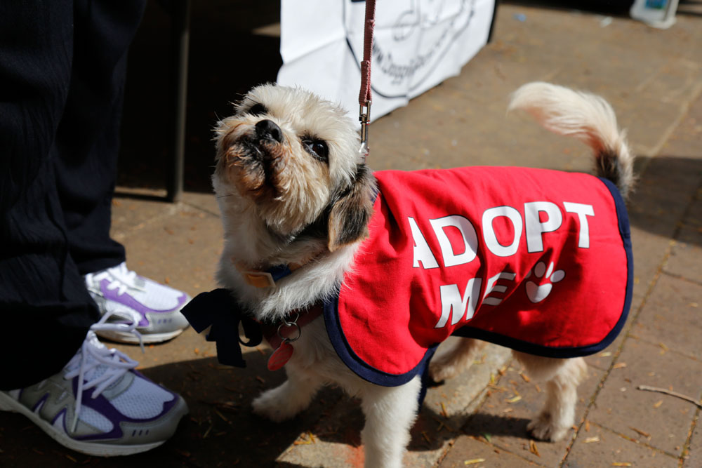 Super Furry Dog Festival 2016 - Little dog wears Adopt Me dog coat