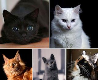 Los gatos y la magia