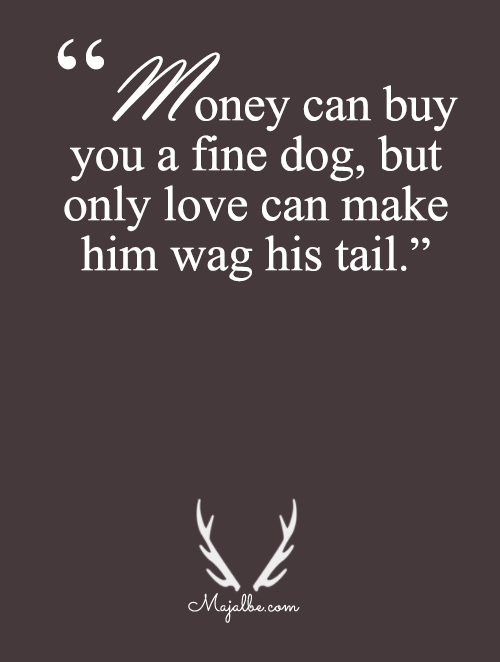 Love Can Make A Dog Wag It's Tail