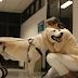 Pedigree demuestra el amor maternal hacia los perros
