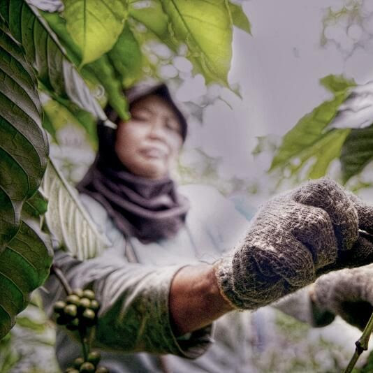 Menuju International Coffee Day 2020 di Bengkulu