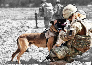 Dogs In The Military: Facts You Never Knew About Military Working Dogs