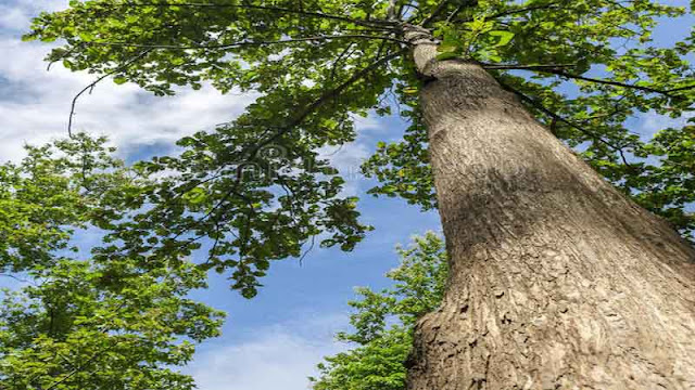 kayu jati hasil olahan perhutani