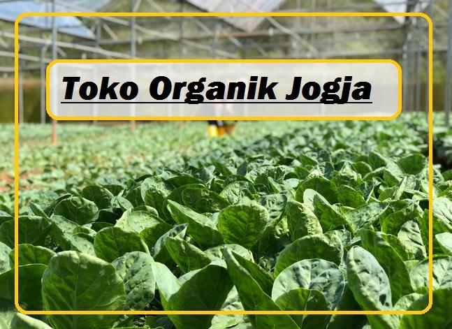 toko organik yogyakarta