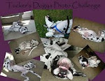 Wolf & Gibson Had Fun Posing in Tucker's Dogya Photo Challenge!