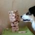 Ο σκύλος που ξέρει να παίζει τζένγκα