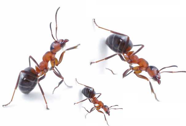 Homemade bait for house ants How to get rid of ants naturally from your house