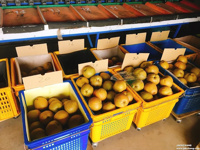 Travel in Miaoli,Dahu Zunli(Pear)-Pear Brand Establishes and Enhances Agricultural Value