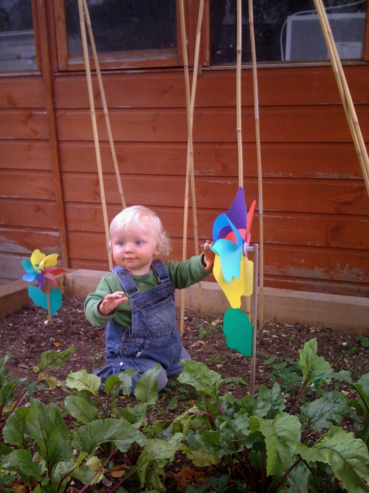 baby in vegetable patch http://www.madmumof7.com