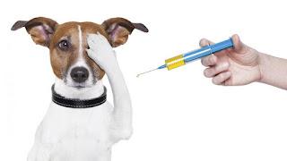 """Porqué vacunar a mi perro"""""""