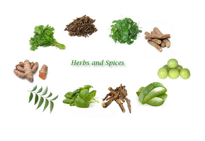 Top 10 Herbs You Should Have in Your Medicine Cabinet