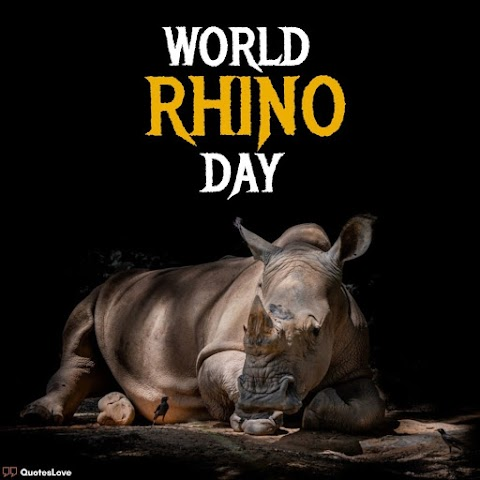 27 [Best] World Rhino Day 2020: Quotes, Slogans, Wishes, Facts, Images, Poster