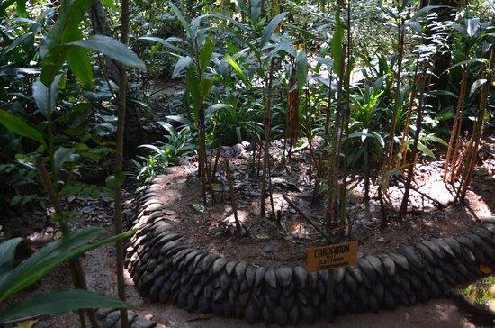حديقة رانويلي للتوابل