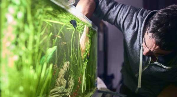6 Cara Menguras Aquarium Mas Koki Tanpa Memindahkan Ikan