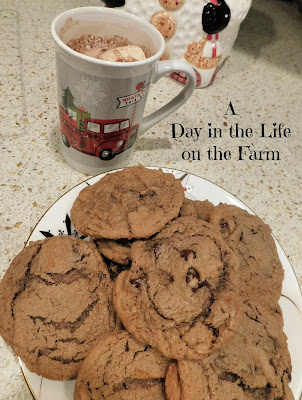 Hot Chocolate Cookies with Chocolate Chips