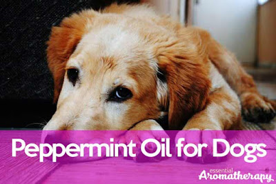 Peppermint Oil For Dogs