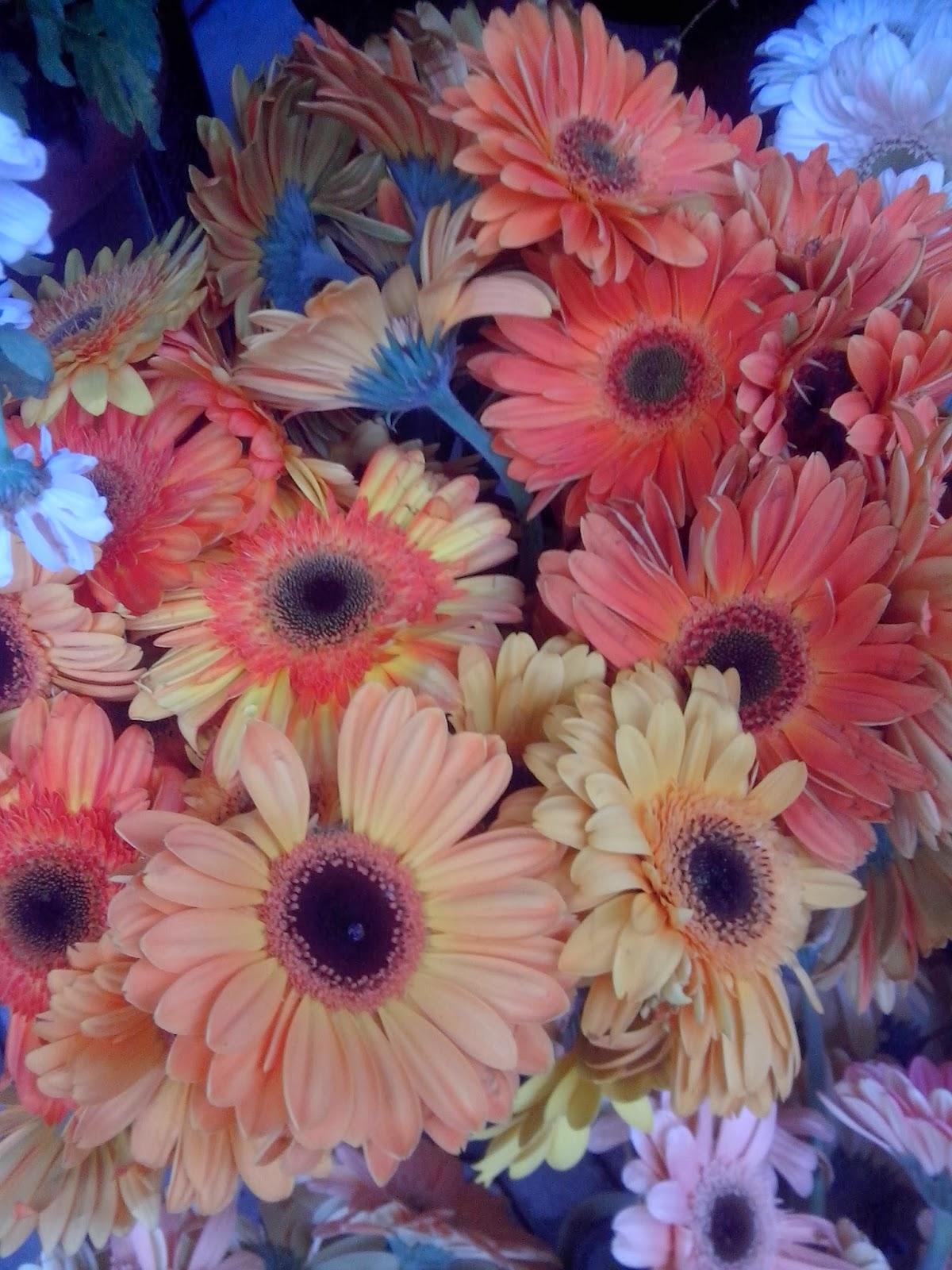 Gerbera - çiçek bakımı