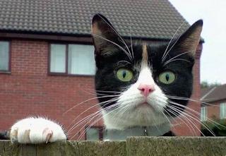 Kediler-Sizi-Nasıl-Görüyor