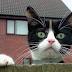 Kedinizin Gözünde Siz Nesiniz?