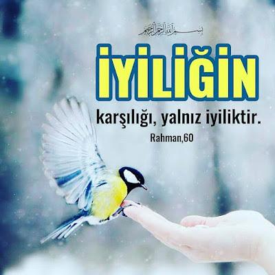 """""""İyiliğin karşılığı, yalnız iyiliktir."""" (Rahmam Suresi 60), Kur'an, ayet, güvercin, elle besleme, kuş besleme"""