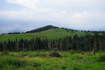 Między Turbaczem a Czołem Turbacza; tu widoczny ten drugi szczyt