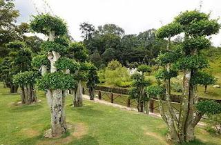 taman ada bonsai serut