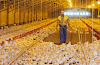 Description of the poultry farmer's job