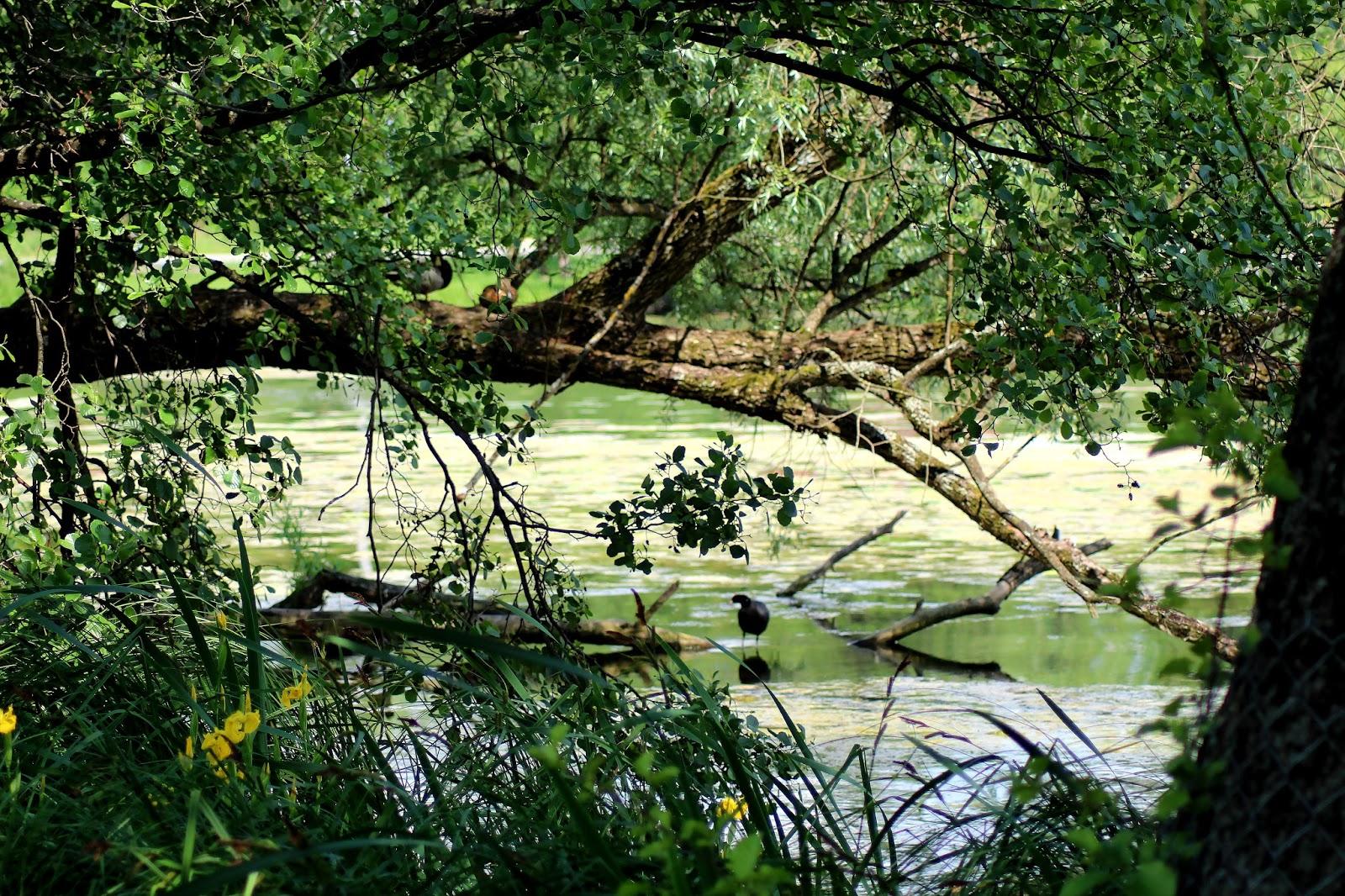 mragowo-jezioro-czos