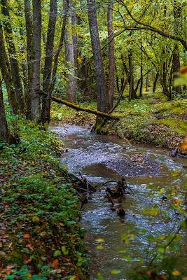 Wäller Tour Iserbachschleife | Wandern im Westerwald 11