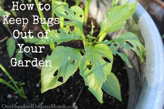 #Gardening : 6 Things To Keep Bad Bugs Out Of Your Garden