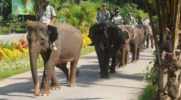 Elephant Back Safari Package - Best Bali Zoo Park Package