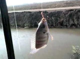 هواية صيد السمك