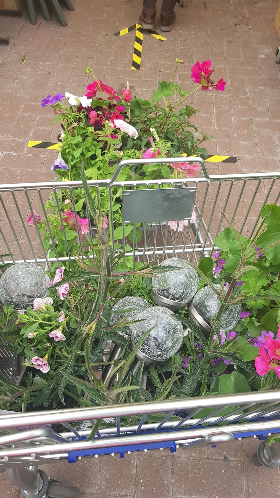 Trolley full of plants after UK garden centres reopened in May 2020