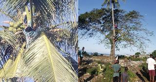 Mohéli : Un homme suspendu à un cocotier...intervention du Cosep