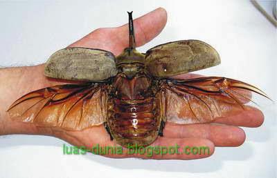 serangga yang dunia