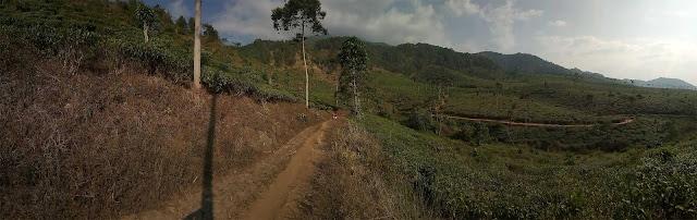 kebun teh jamus panorama