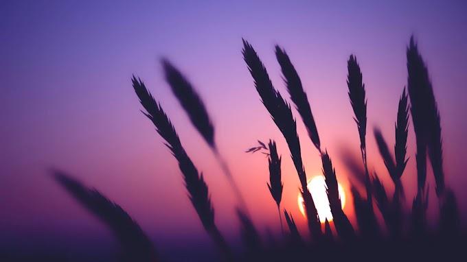 Paisagem Lindo Por do Sol