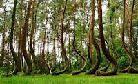 Hợp đồng rà soát, đánh giá trữ, sản lượng rừng
