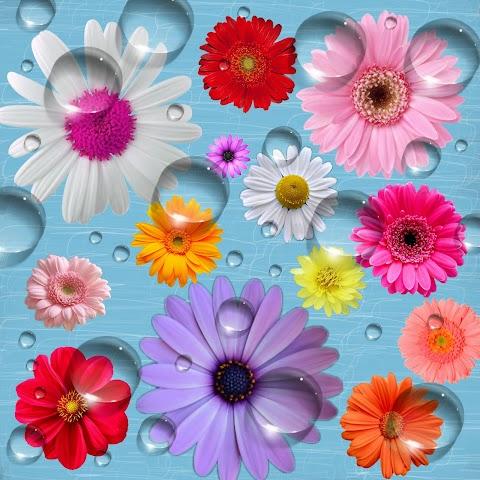 Những Nụ Hoa Trong Nước